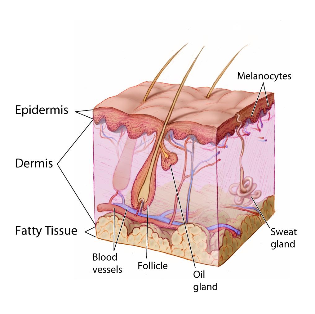 Dermatologia Brescia